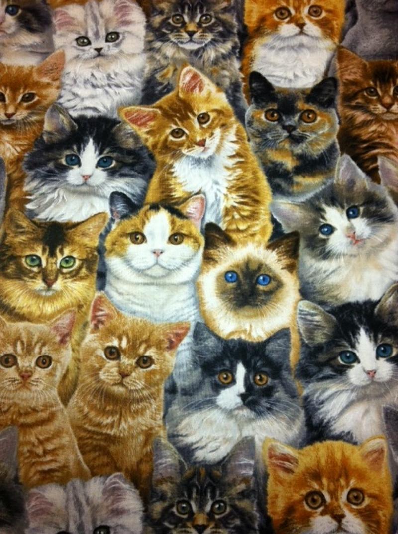 Cat Kitten Kitty Cats Cotton Fabric Quilt Fabric AZ26