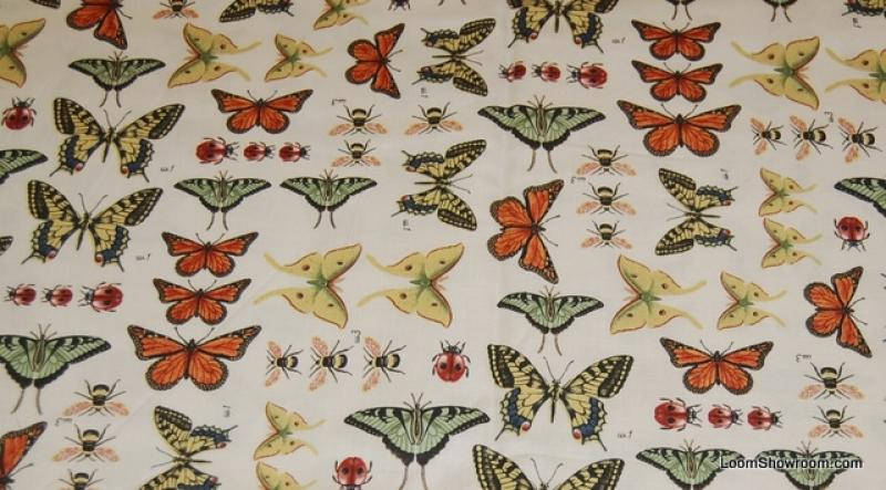 N156 Vintage Nature Cabinet Illustration Butterfly Insect Butterflies Quilt Fabric Cotton Fabric