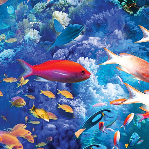 CORAL REEF MULTI BRIGHT By MARIA KALINOWSKI