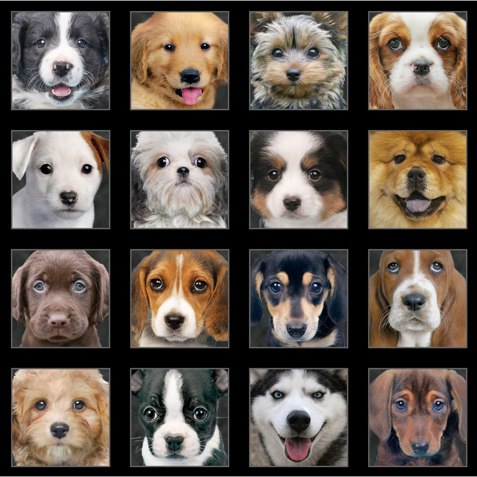 Adorable Pets - Panel