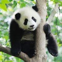 Zen Teaser Animal Wood Puzzles