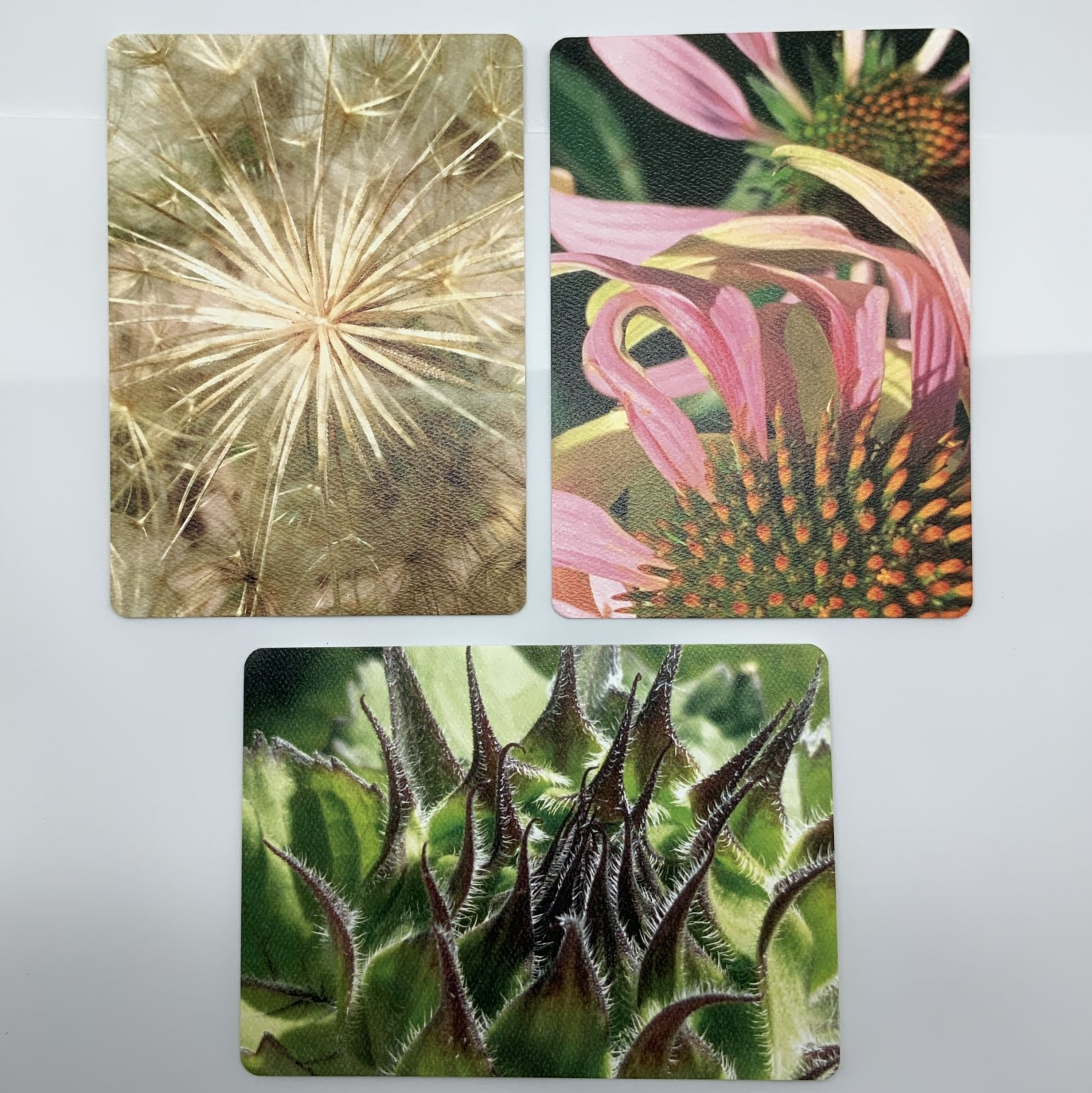 Artistic Floral Postcard Collection 2