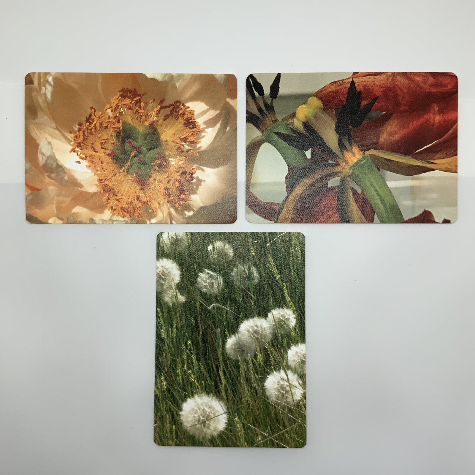 Artistic Floral Postcard Collection 1