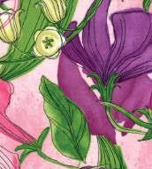 Sweet Pea Lily Primrose