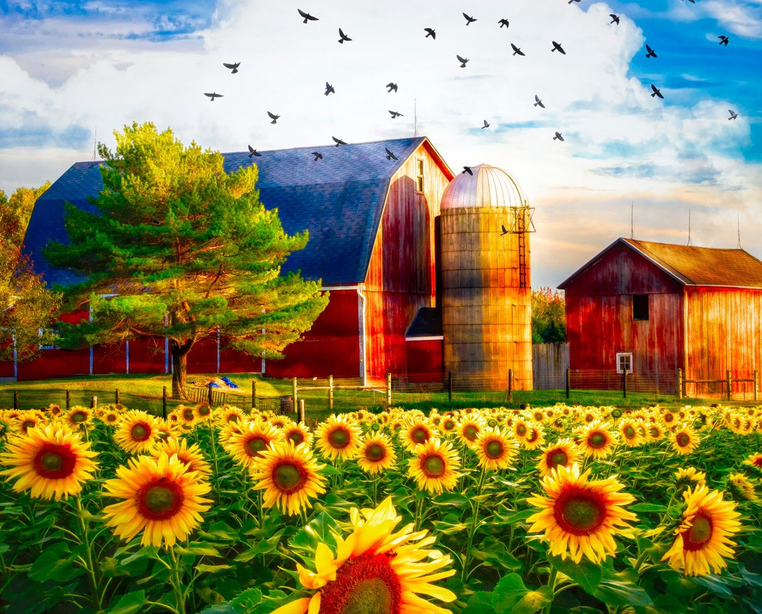 Sunflowers & The Barn Digital Panel by David Textiles AL38900C1