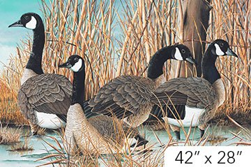 Naturescapes, Canada Goose, Digitally Printed Fabric Panel 28in by Paul Twitchell for Northcott : DP21824-42