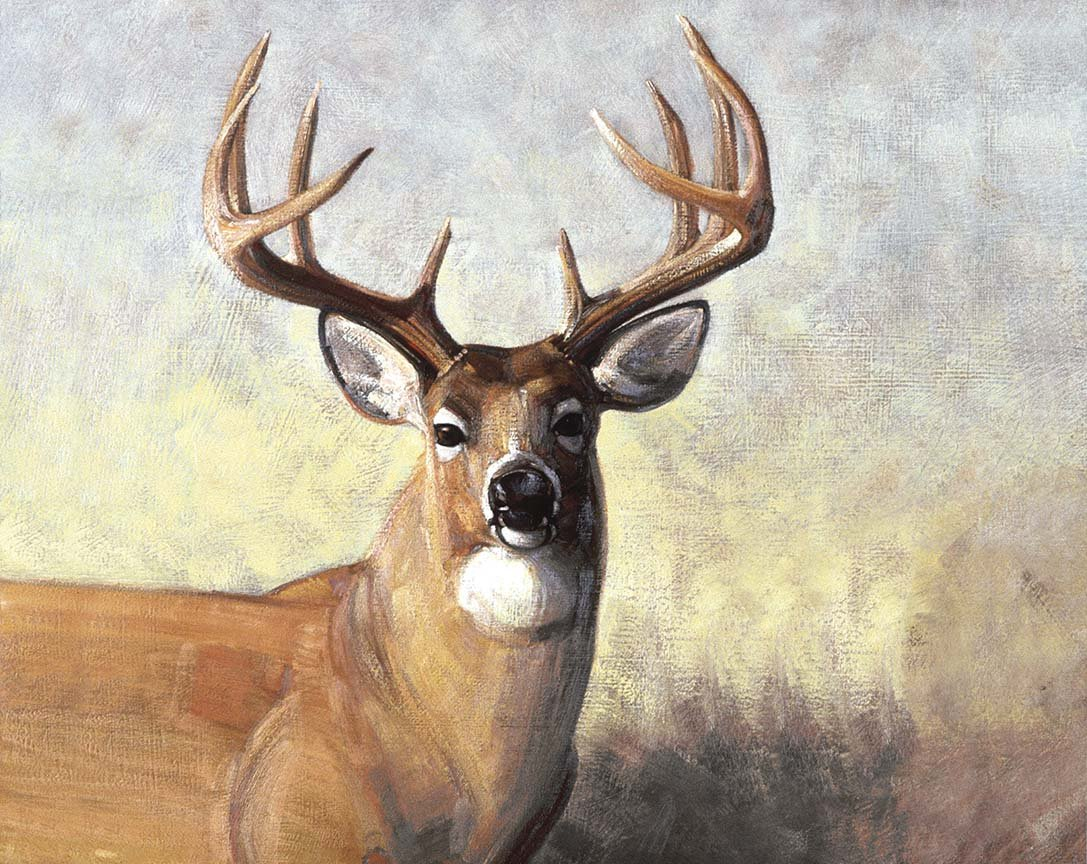 Majestic Outdoors, Majestic Deer Fabric Panel 36in by Greg & Company for Riley Blake Designs : PD5570-deer