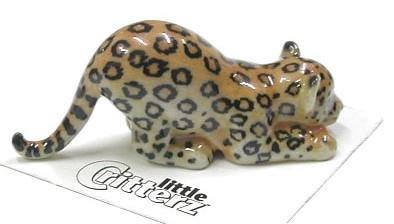 Little Critterz Amazon Jaguar Cub