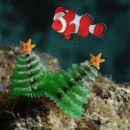 Christmas reef