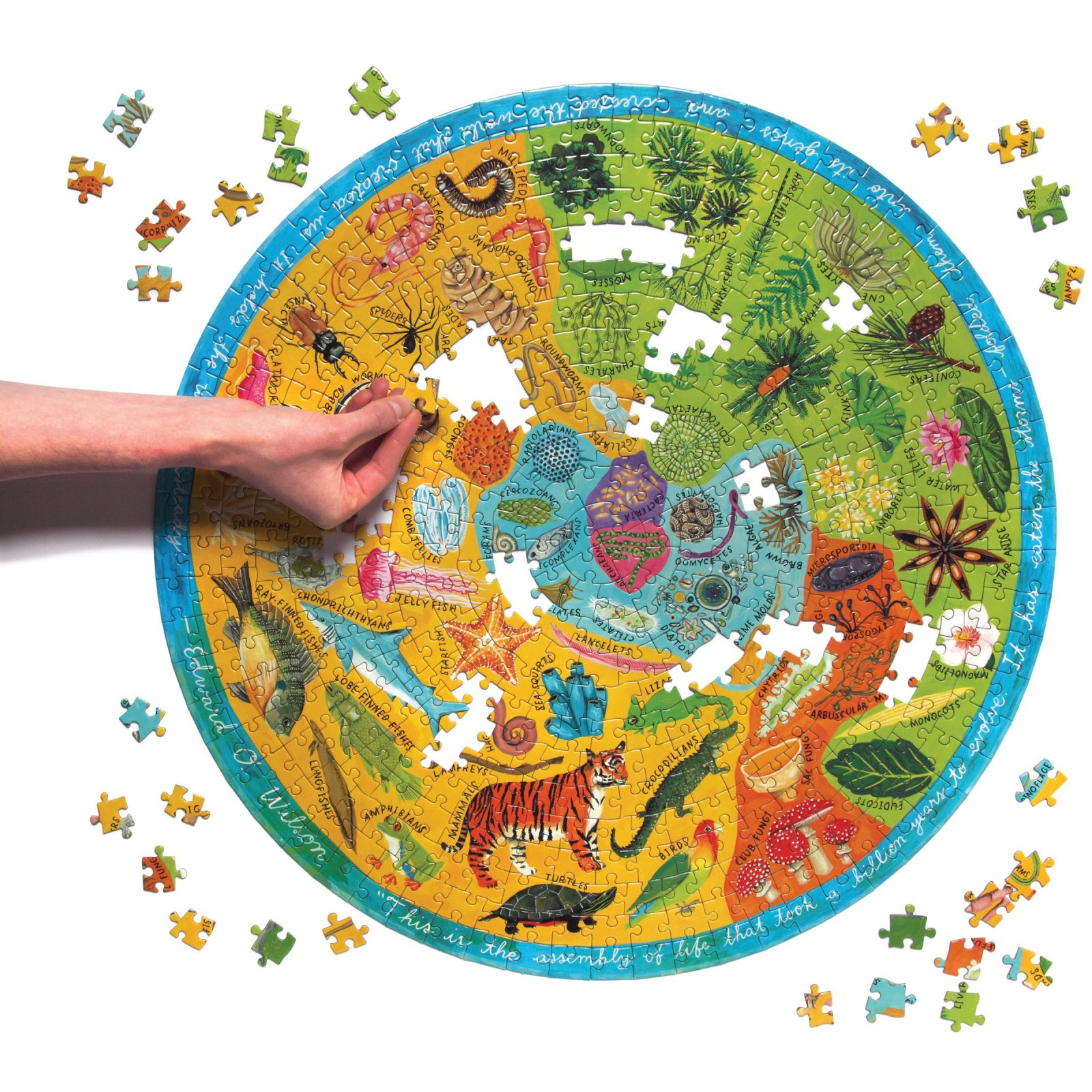 Biodiversity 500 Piece Puzzle by Eeboo