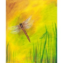 Dragonfly Dreams Adult Paint