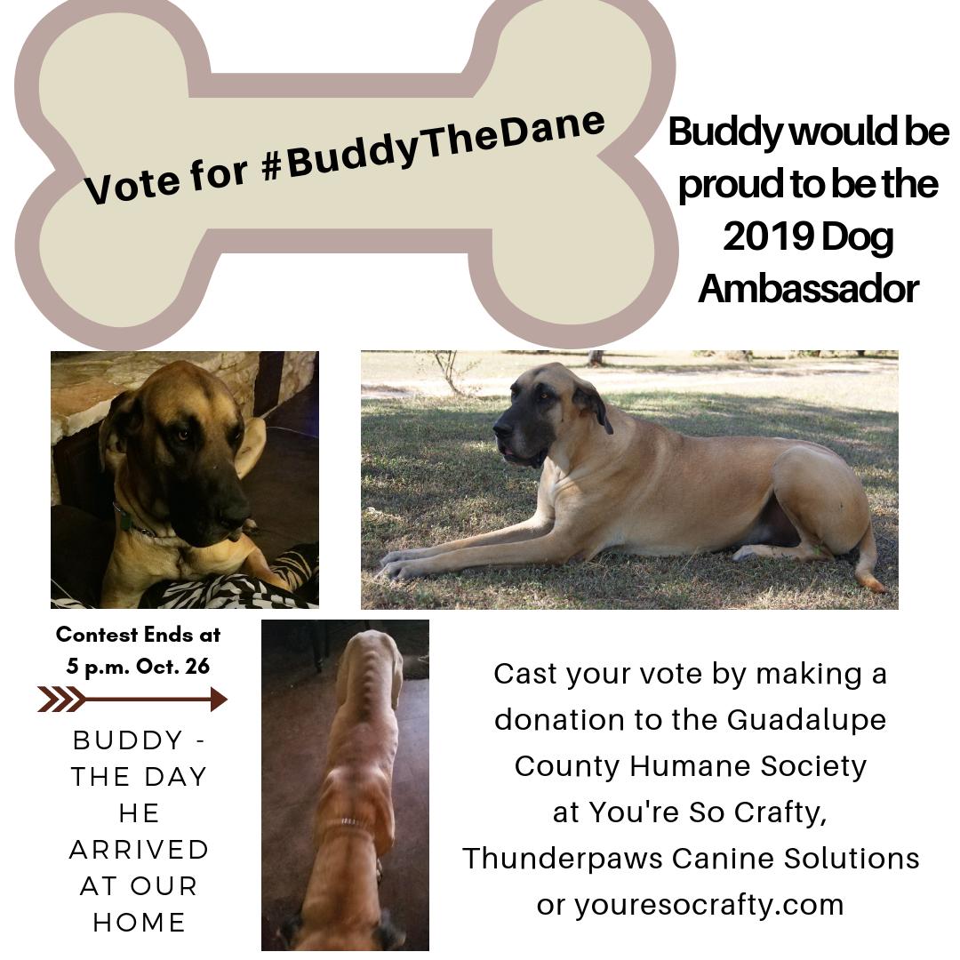Buddy's Dog Ambassador Campaign