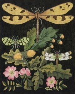 MS2151B DRAGONFLY with ACORNS by Melissa Shirley