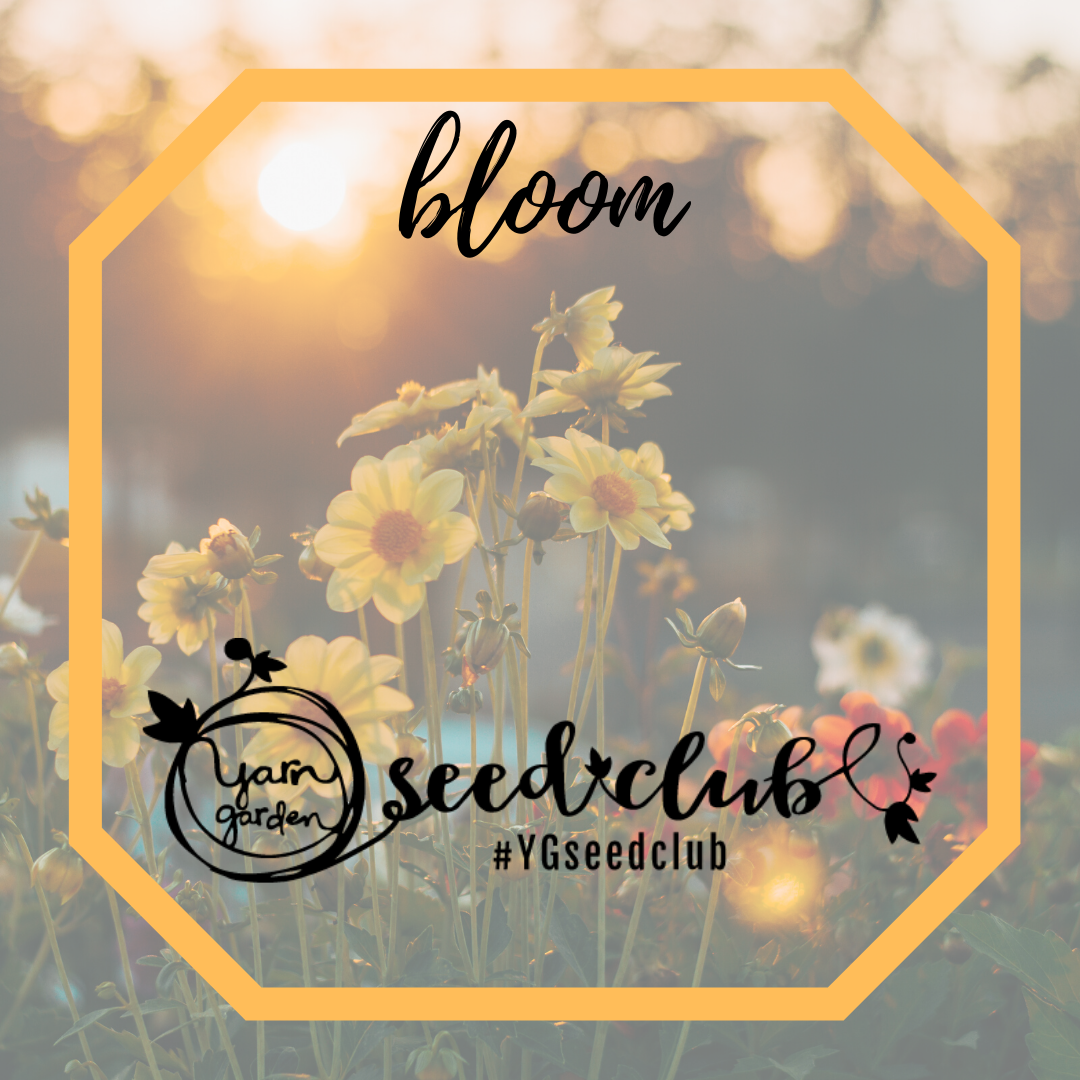 Seed Club: Bloom