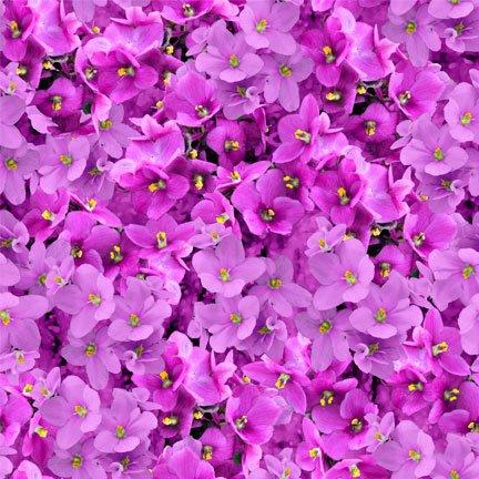Wilmington - Shades of Violet - Magenta
