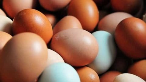 Eggs - 1 Dozen - Easter Egg Variety (Available In-Shop Only)
