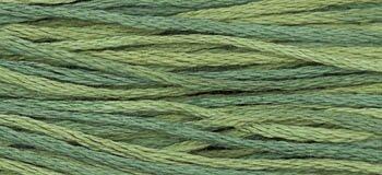 WDW Blue Spruce ~ 1276