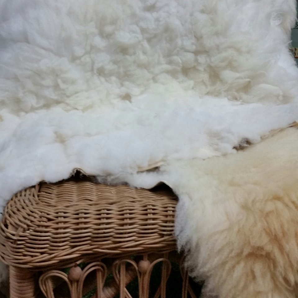 Sheep Skins small