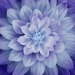 DREAM BIG  A Hoffman Spectrum Purple