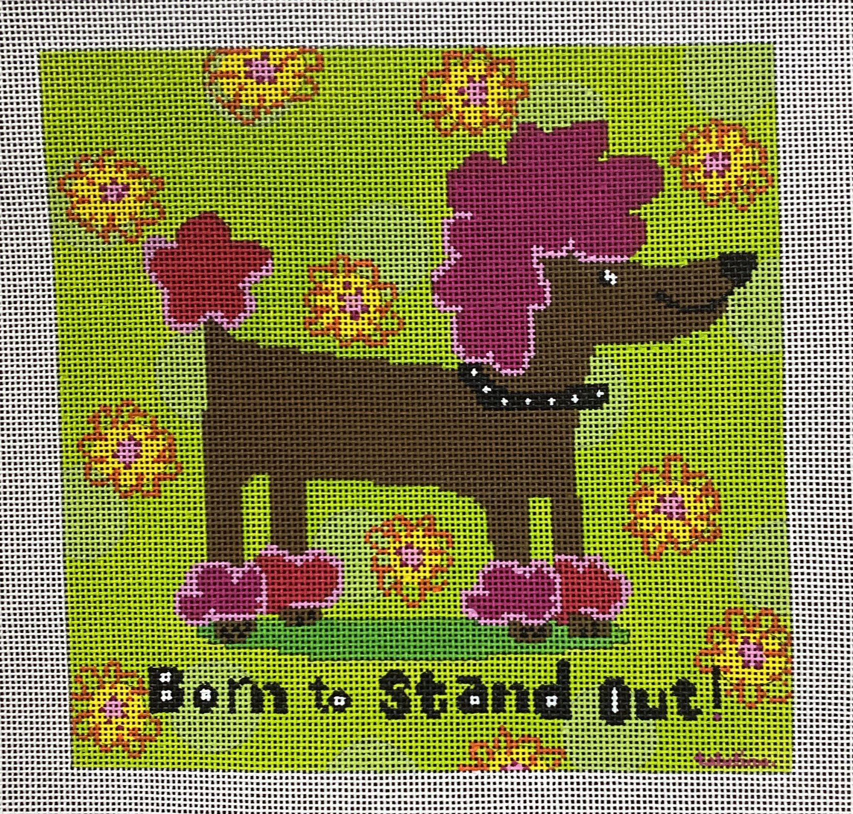 born to stand out, poodle