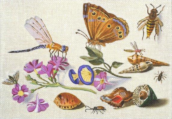 dragonfly & shells
