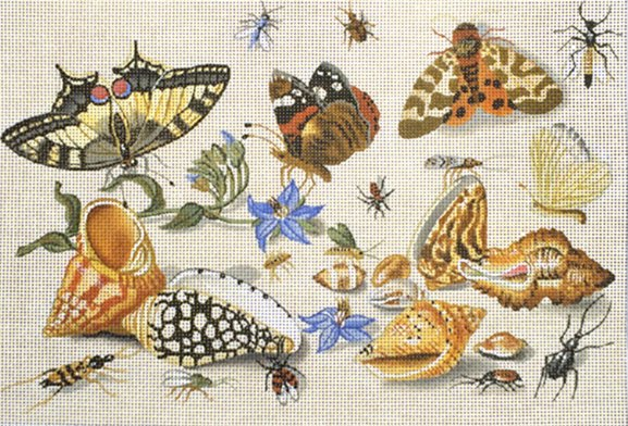 shells  & insects