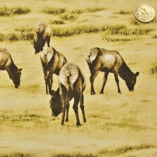 Elk Gathering Elk Grazing Brown - 1560-2