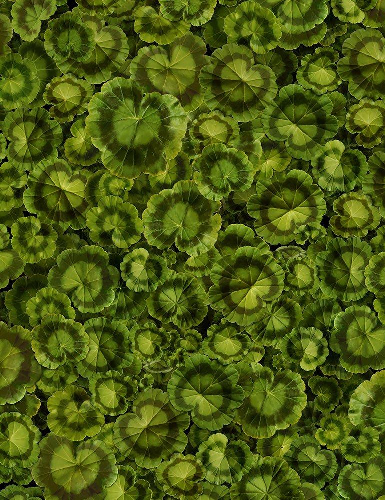 Front Porch - C6379-LEAF - Geranium Leaves