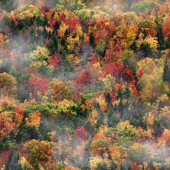 Call of the Wild - Autumn Trees<br>Q4537-66