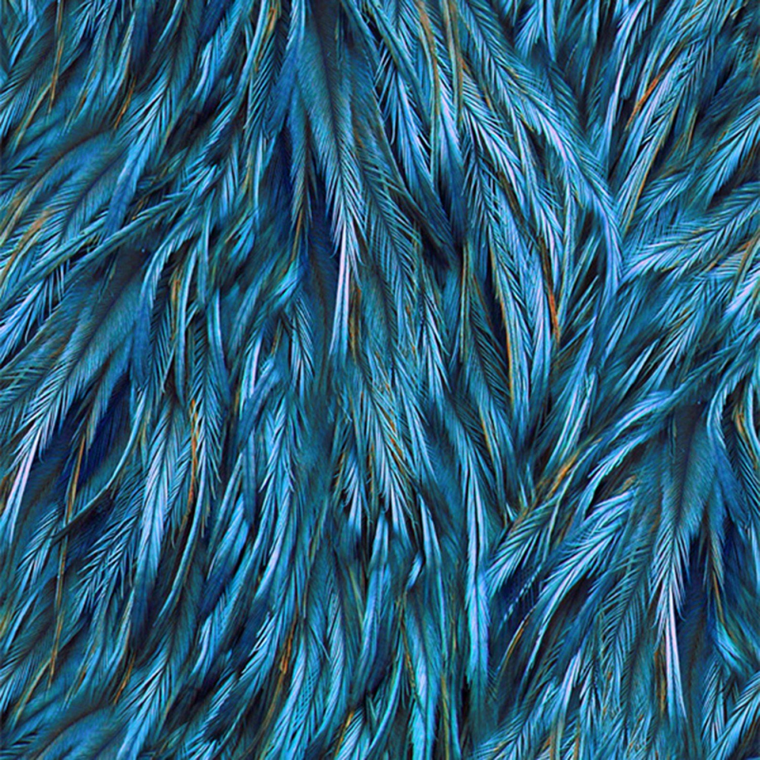 Royal Feathers Digitally Printed