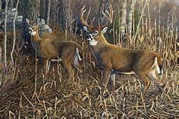 Heading For Cover Deer