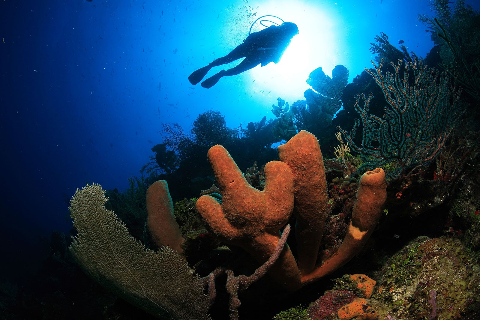 Image of Roatan Colorful Reefs