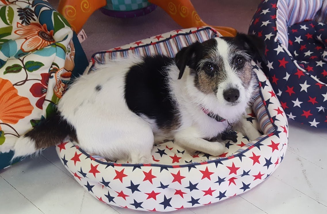 Red White and Blue Stars Dog Bed