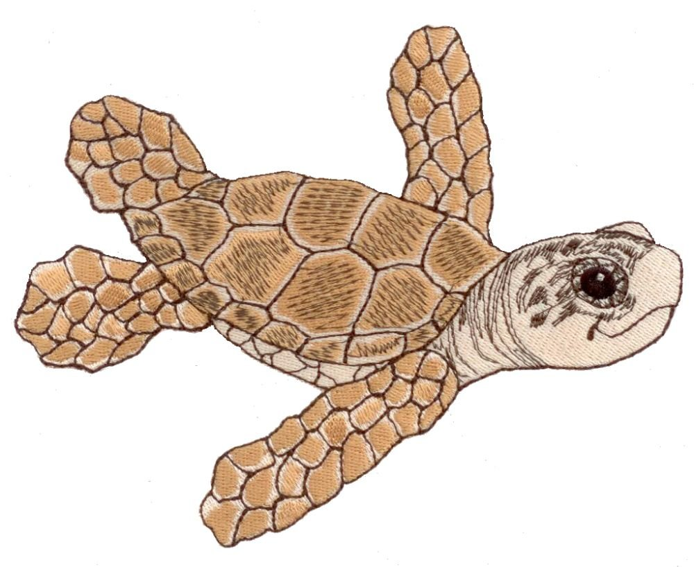 Water Babies Sea Turtle by Mark Hordyszynski