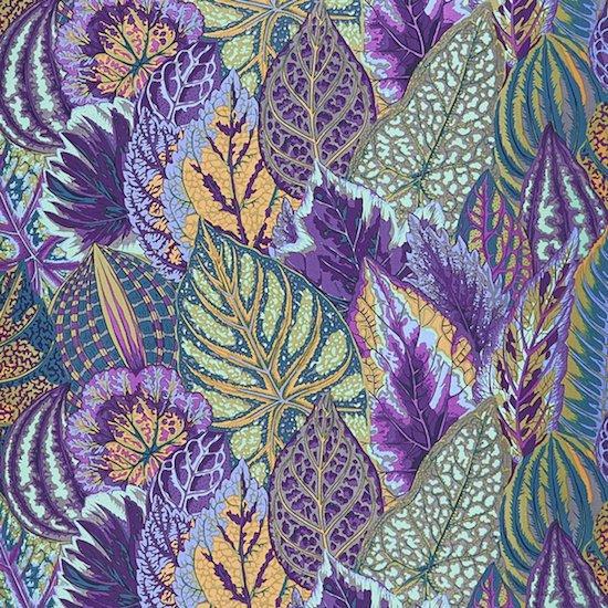 Coleus- Lavender