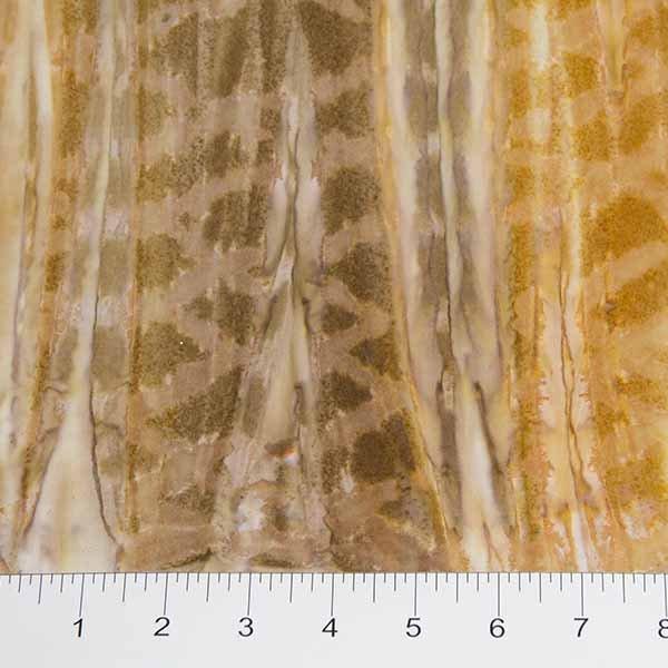 Banyan Strokes Medium Tan Shades