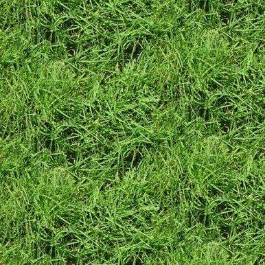 Blank Natural Treasures Grass 8616-66 Green
