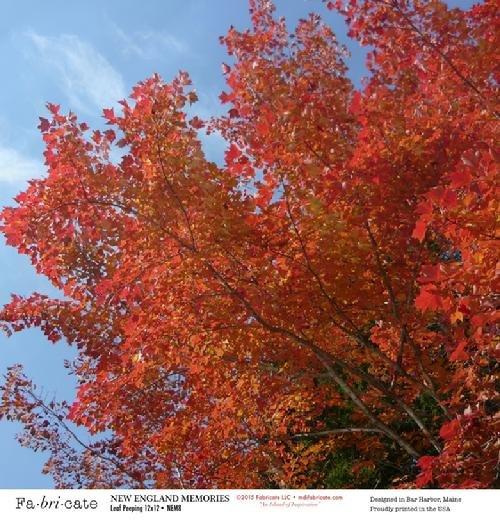 NEM: Leaf Peeping paper