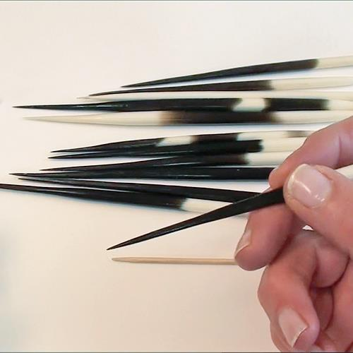 African Porcupine Quills - set of 3