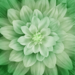 Dream Big Green