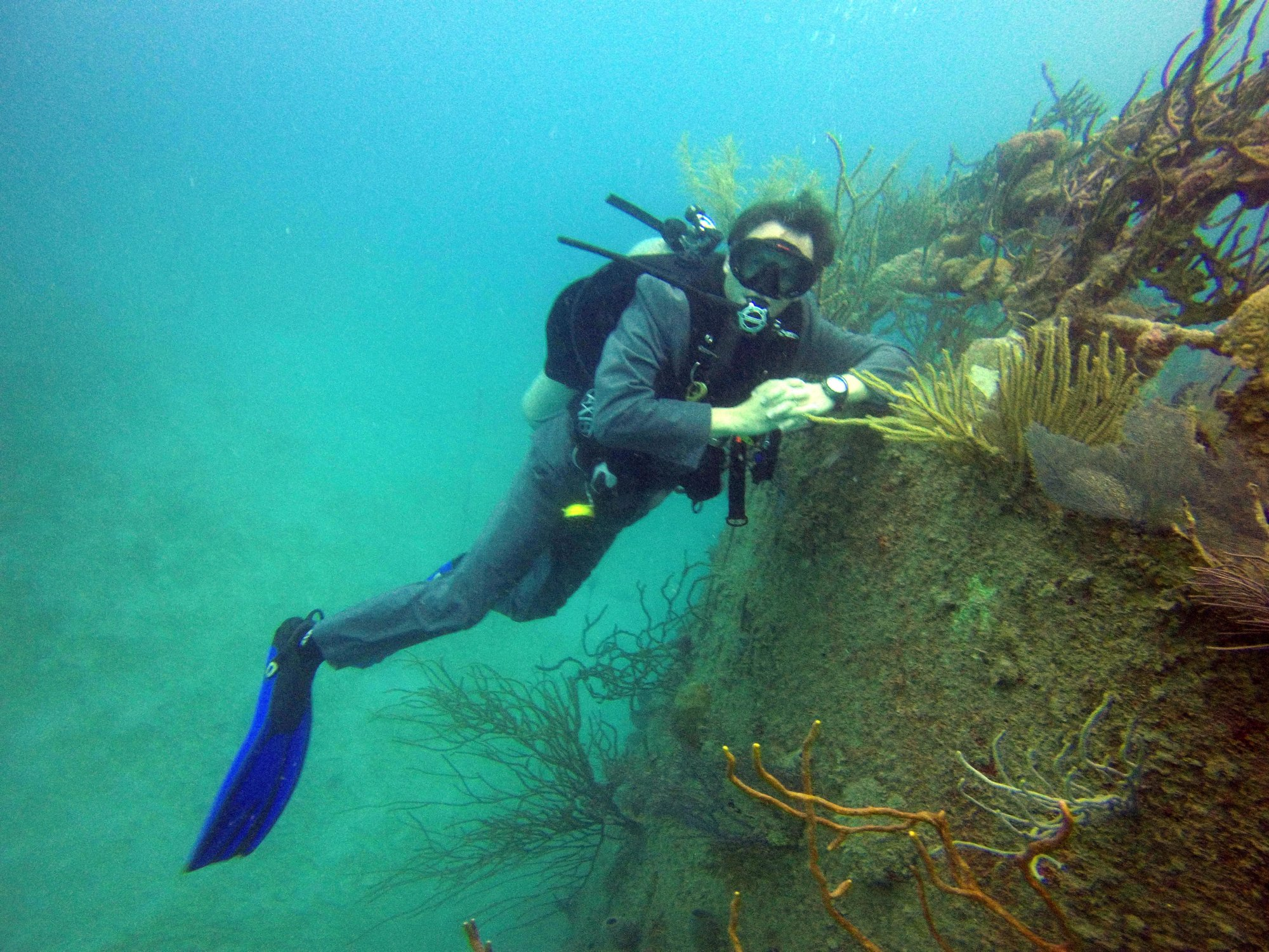 Virginia Scuba is Northern Virginia and Manassas' home for ...