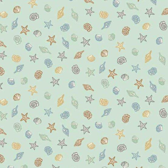 Beachcomber - Shells