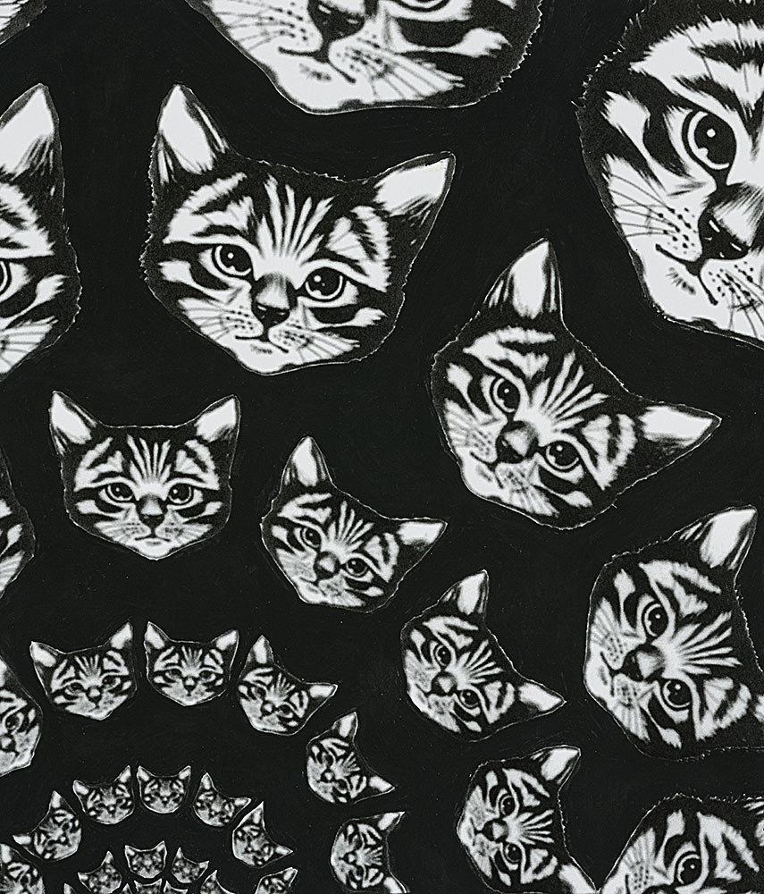 Cat Finity