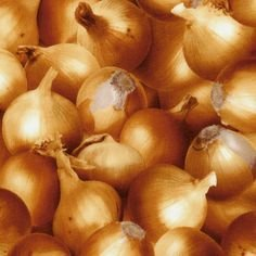 Onions - Farner's Market
