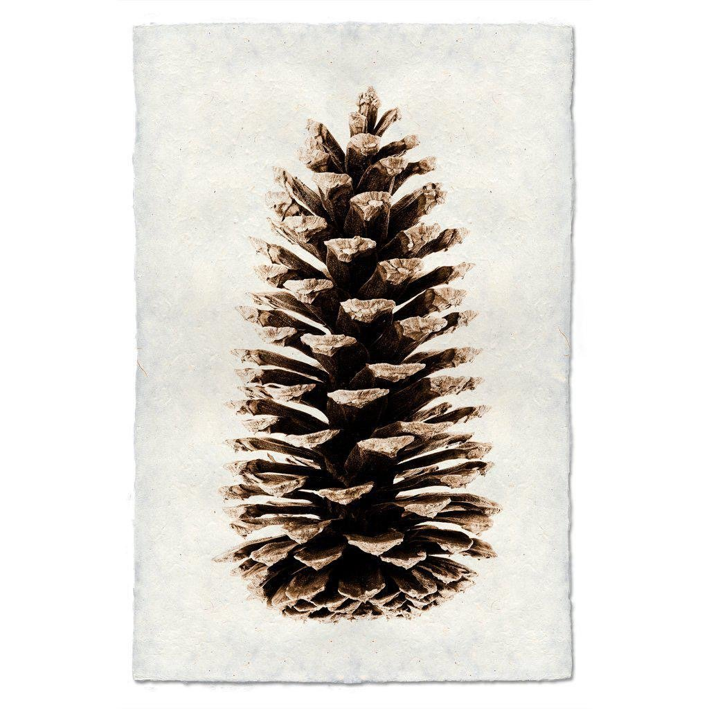Loblolly Pinecone 9x14 Print on Nepalese Paper