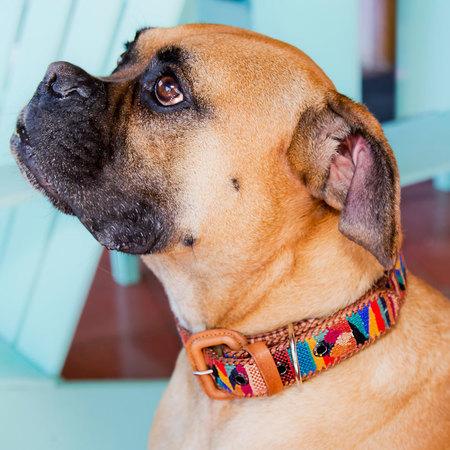 Dog Collar Med/Lg