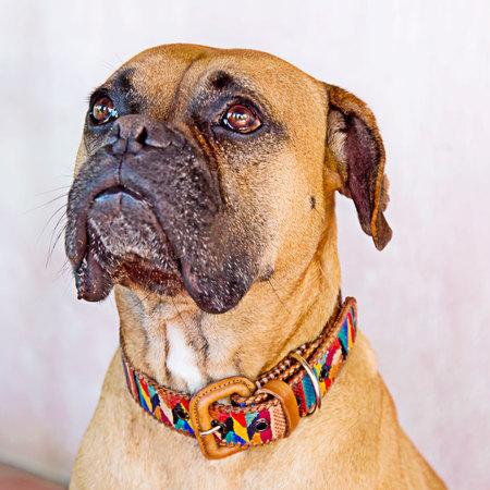 Dog Collar Sm/Med