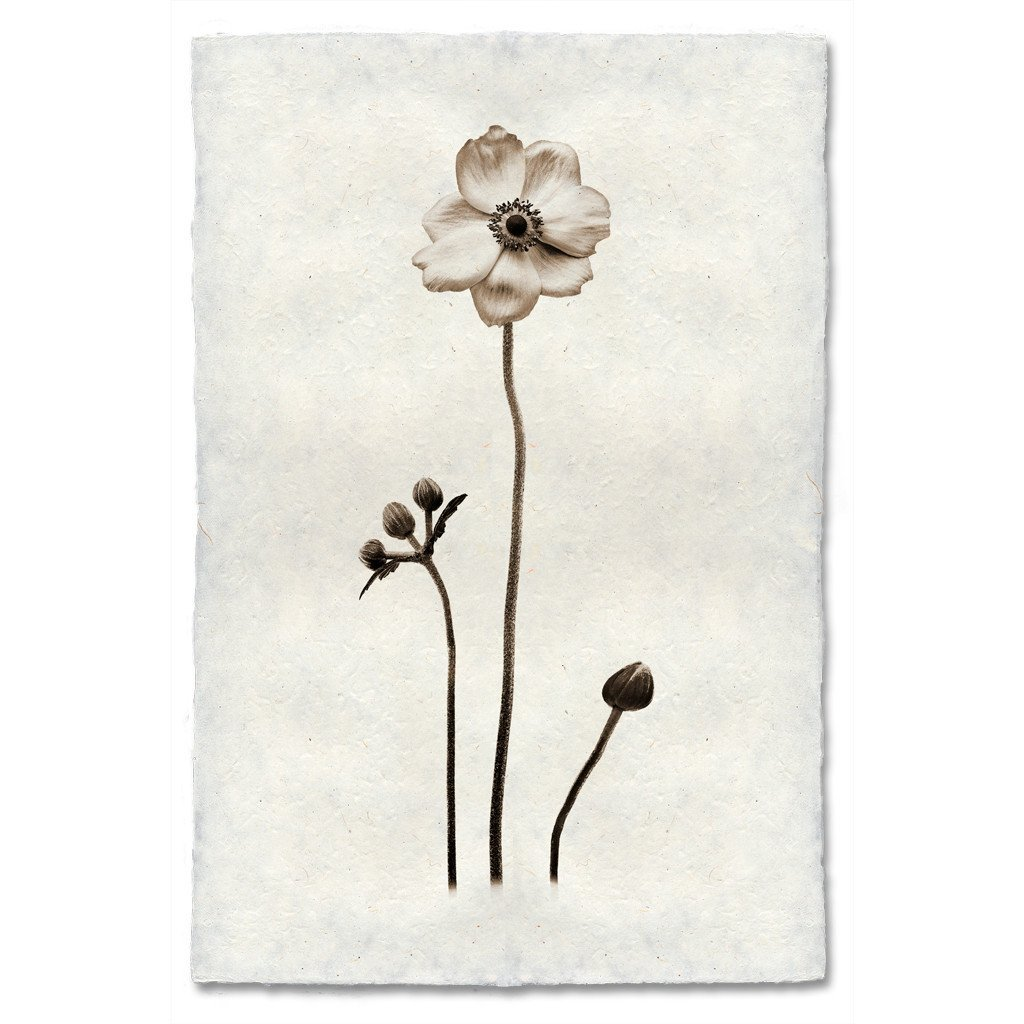 Anemone 20x30 Print on Nepalese Paper
