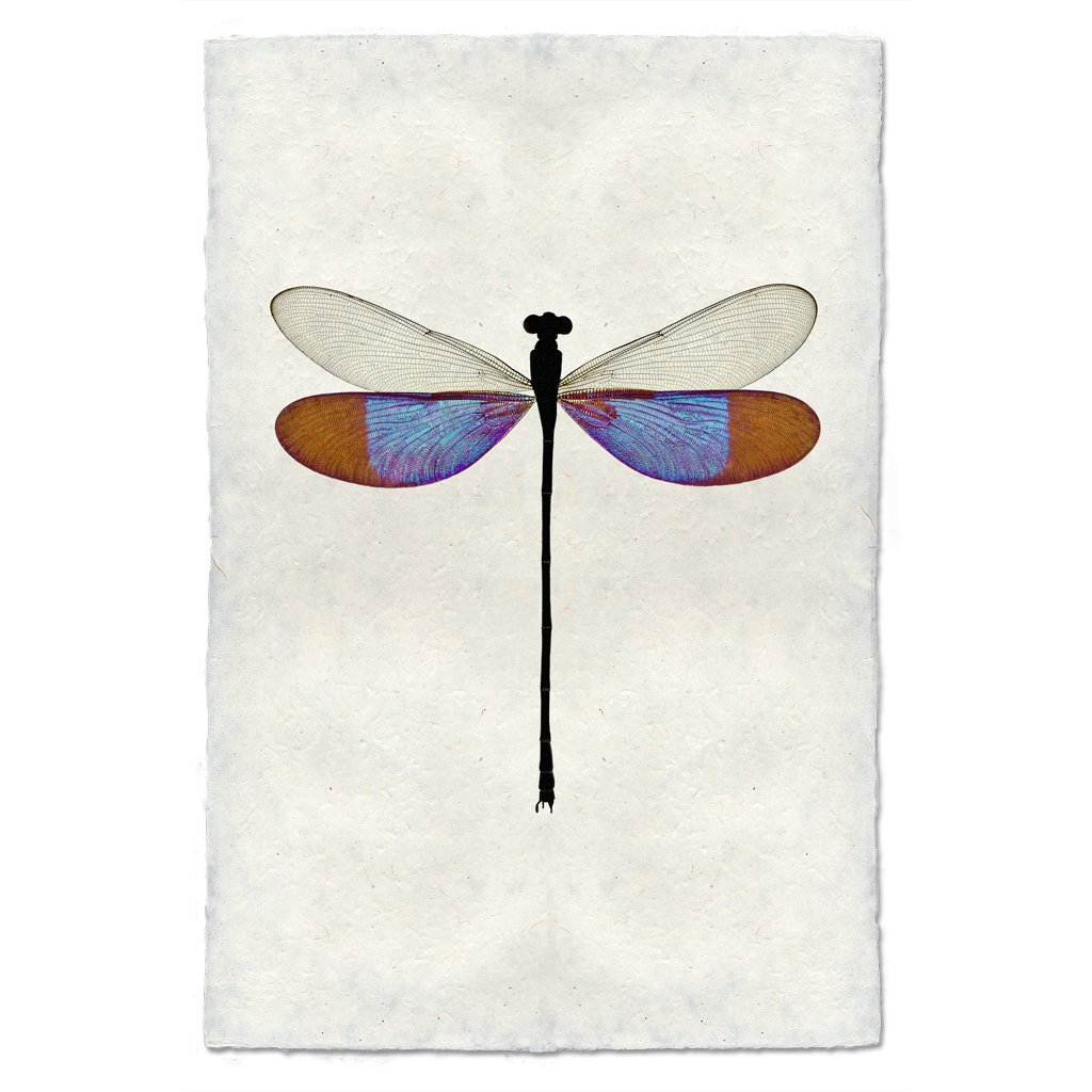 Blue Damsel 20x30 Print on Nepalese Paper
