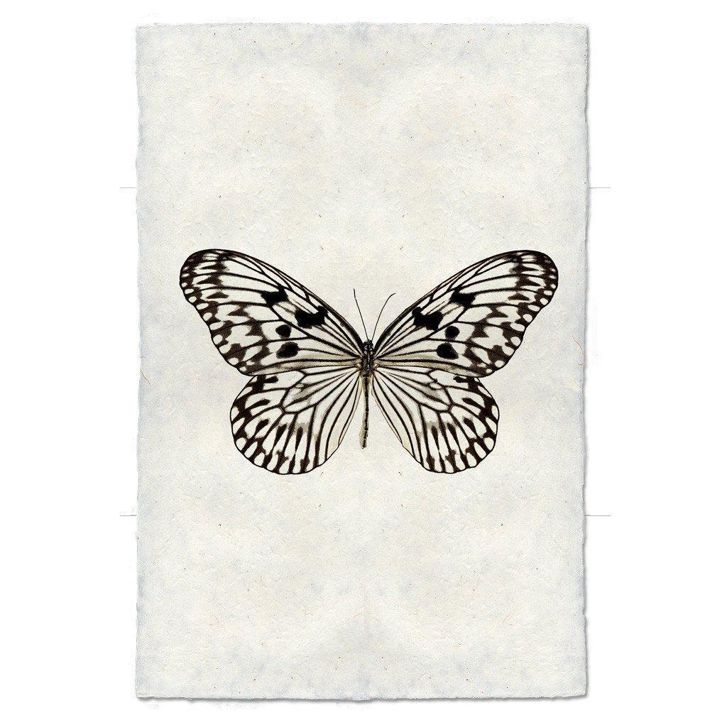 Butterfly #14 Print (Malabar Tree Nymph)